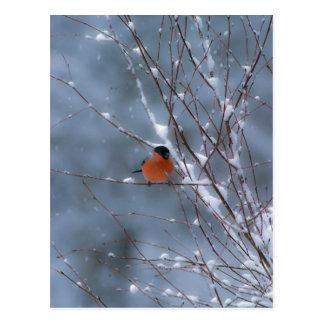 Bullfinch masculino en la postal de la nieve