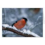 Bullfinch masculino en la tarjeta de la nieve