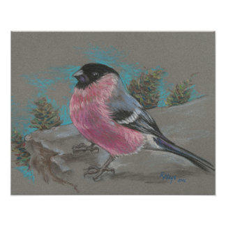 Bullfinch on a cliff poster