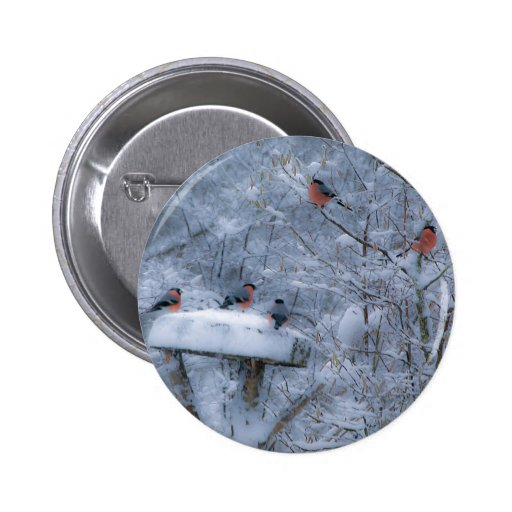 Bullfinches  Button Badge