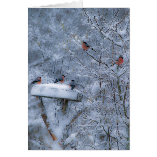 Bullfinches Card