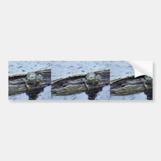Bullfrog Car Bumper Sticker