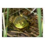 Bullfrog Card