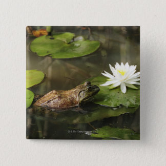 Bullfrog in Lily Pond Button