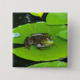 Bullfrog on Lilypads Pinback Button