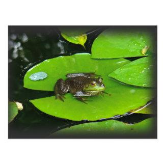 Bullfrog on Lilypads Postcard