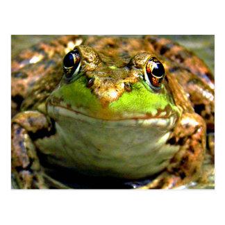 Bullfrog Photo Postcard