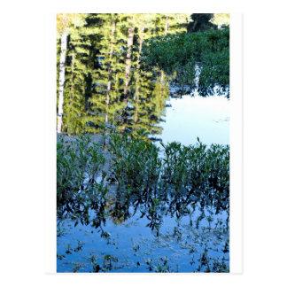 Bullfrog Pond Reflection Postcard