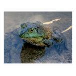 Bullfrog Post Card