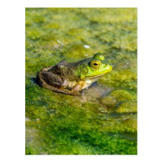 Bullfrog Postcard