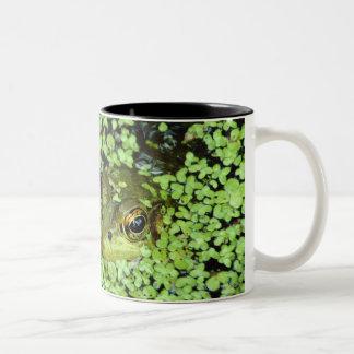 Bullfrog (Pyxicephalus adspersus) in duckweed Two-Tone Coffee Mug