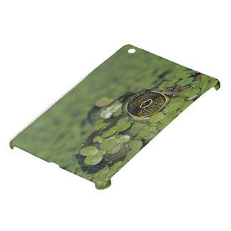 Bullfrog, Rana catesbeiana, adult in duckweed Case For The iPad Mini