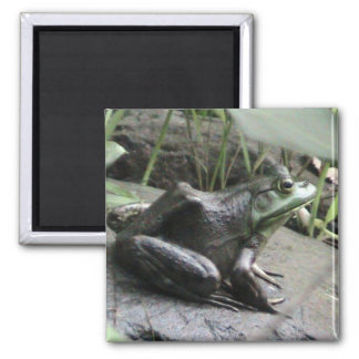 Bullfrog side view 2 inch square magnet