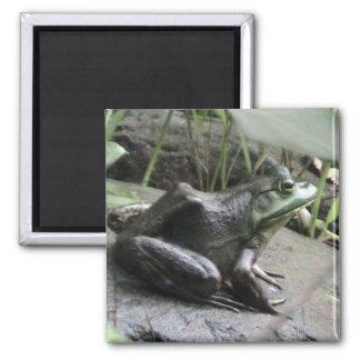 Bullfrog side view magnet