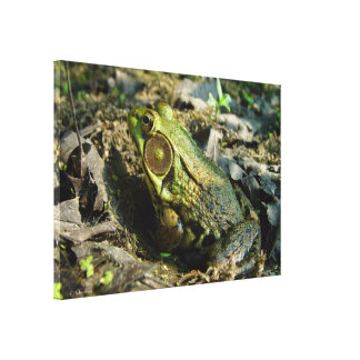 Bullfrog Stretched Canvas Print