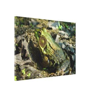 Bullfrog Stretched Canvas Print