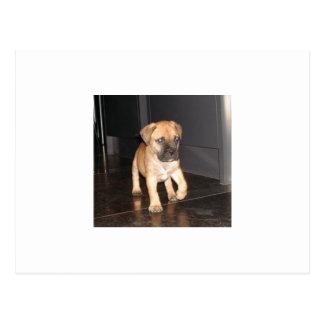 bullmastiff 3 puppy postcard