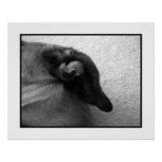 Bullmastiff Ear 2 Posters