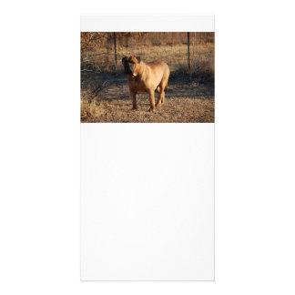 bullmastiff full.png card