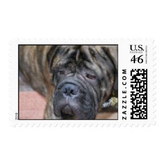 Bullmastiff Postage Stamp