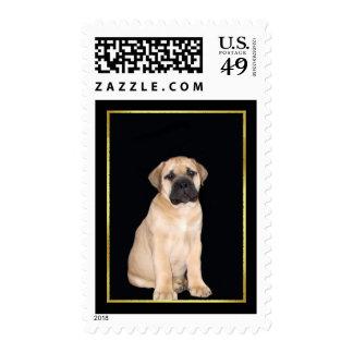 Bullmastiff Puppy Stamps