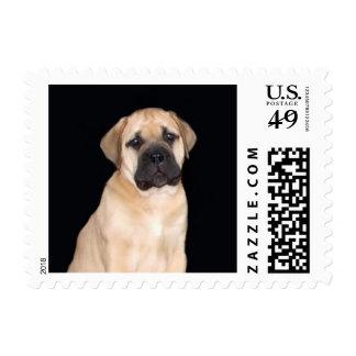 Bullmastiff Puppy Postage Stamps