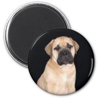 Bullmastiff Puppy round magnet