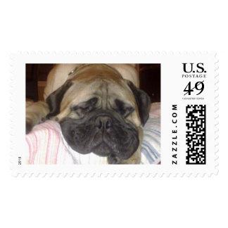 Bullmastiff Stamp (L)
