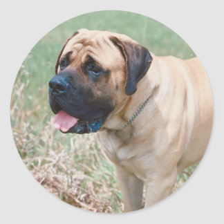 Bullmastiff Sticker