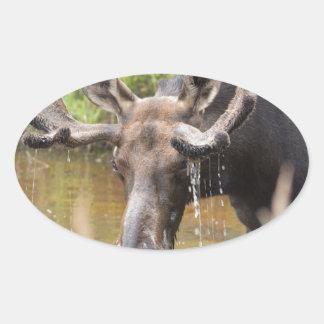Bullwinkle Oval Sticker