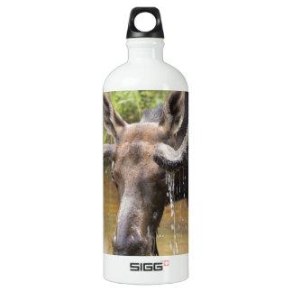 Bullwinkle Water Bottle