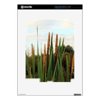 Bulrushes, early morning, Spain iPad 2 Skin