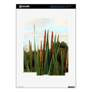 Bulrushes, early morning, Spain iPad 3 Decal