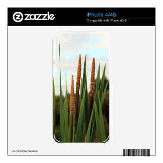 Bulrushes, early morning, Spain Skins For The iPhone 4