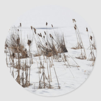 Bulrushes in frozen lake classic round sticker