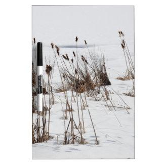 Bulrushes in frozen lake Dry-Erase board
