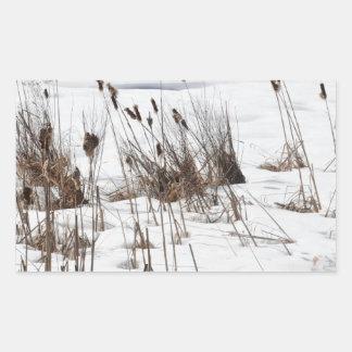 Bulrushes in frozen lake rectangular sticker