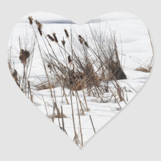 Bulrushes in frozen lake sticker