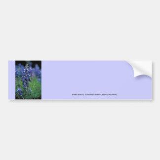 Bumbersticker / Texas Bluebonnet Bumper Sticker
