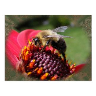 Bumble Bee 195 ~ postcard