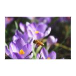 Bumble Bee Canvas Canvas Print