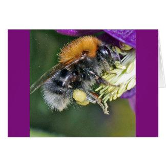 Bumble bee close up Card