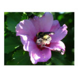 Bumble Bee Flower Postcard