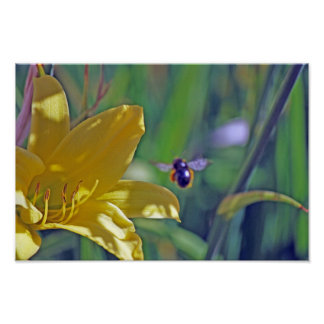 Bumble Bee in Flight Posters