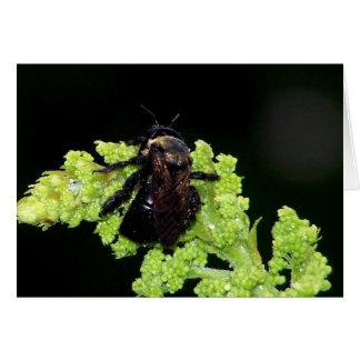 Bumble Bee In The Rain Card