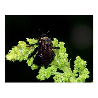 Bumble Bee In The Rain Postcard