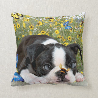 Bumble Bee Lands On Boston Terrier's Nose Pillows