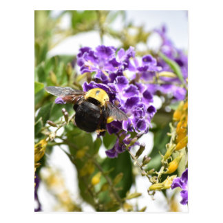 BUMBLE BEE ON A PURPLE FLOWER AUSTRALIA POSTCARD