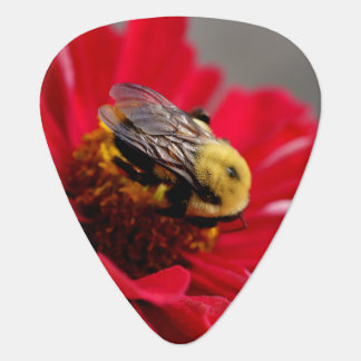 Bumble Bee on a Red Flower Guitar Pick