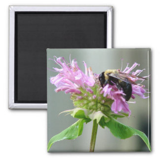 Bumble Bee on Bee Balm Flower Magnet